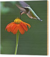 Hummingbird And Mexican Sunflower Wood Print