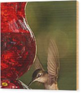 Hummingbird At The Feeder Wood Print