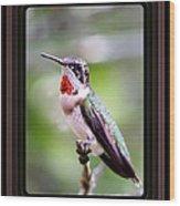 Hummingbird Card Wood Print