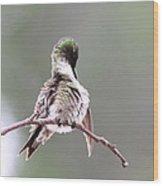 Hummingbird - Cleaning Up Wood Print