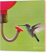 Hummingbird Drinking Wood Print