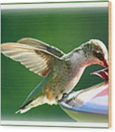 Hummingbird Eating Wood Print