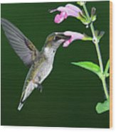 Hummingbird Feeding On Pink Salvia Wood Print