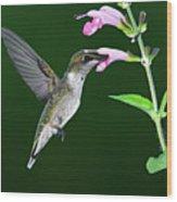 Hummingbird Feeding On Pink Salvia Wood Print by DansPhotoArt on flickr
