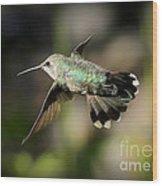 Hummingbird Fly By Wood Print