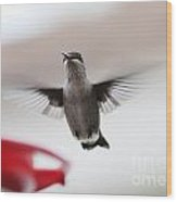 Hummingbird Flying Wood Print