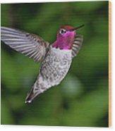 Hummingbird Glory Wood Print