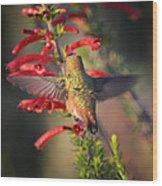 Hummingbird In Flight 1 Wood Print