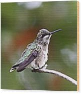 Hummingbird - Little Friend Wood Print
