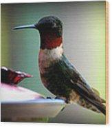 Hummingbird-male Wood Print