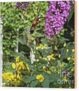 Hummingbird Moth In Flight  Wood Print