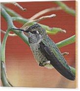 Hummingbird Nap Time  Wood Print