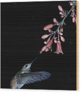 Hummingbird No 7 Wood Print