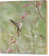 Hummingbird Nourishment Wood Print