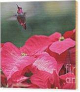 Hummingbird Over Poinsettias Wood Print