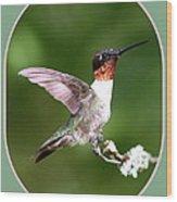 Hummingbird Photo - Light Green Wood Print