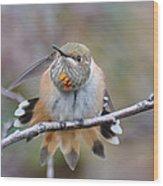 Hummingbird Stretch Two Wood Print