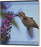 Hummingbird With Blue Border - Digital Painting Wood Print