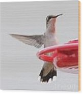 Hummingbird With Wings Back Wood Print