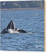 Hump Back Whale In Alaska Wood Print