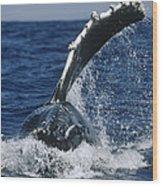Humpback Whale Flipper Slap Hawaii Wood Print