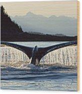 Humpback Whale Megaptera Novaeangliae Wood Print