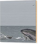 Humpbacks Breeching Wood Print