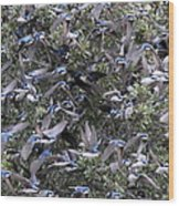 Hundreds - Tree Swallows Wood Print