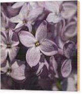 Hungarian Lilac Nr 9 Wood Print