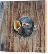 Hungry Birds Wood Print by Dirk Barnhart