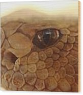Hungry Eye Wood Print