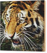 Hungry Tiger Wood Print