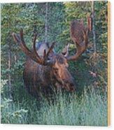 Hunting Some Munchies Wood Print