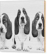 Hush Puppies Wood Print