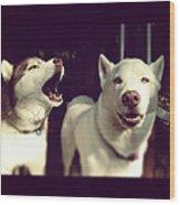 Husky Dogs Wood Print