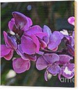 Hyacinth Bean Wood Print
