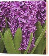Hyacinth Hyacinthus Sp Miss Saigon Wood Print