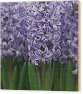Hyacinth Hyacinthus Sp Skyline Variety Wood Print
