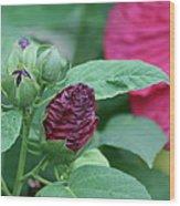 Hybiscus Bud Wood Print