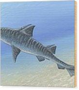 Hybodus Shark, Artwork Wood Print
