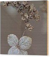 Hydrangea Arborescens Dry Flower Head In Winter Wood Print