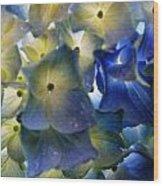 Hydrangea Close-up Wood Print