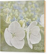 Hydrangea Dreams Wood Print