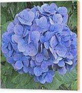 Hydrangea Flowerhead Wood Print