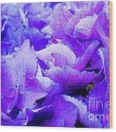 Hydrangea Petals Wood Print
