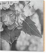 Hydrangeas In Black And White Wood Print