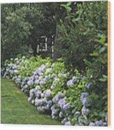 Hydrangeas In Bloom Along A Landscaped Wood Print