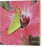 I Love My Hibiscus Wood Print