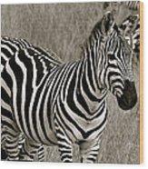 I See Stripes Wood Print
