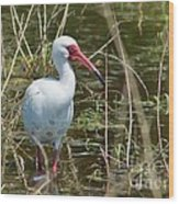 Ibis At Local Pond Wood Print by Lynda Dawson-Youngclaus